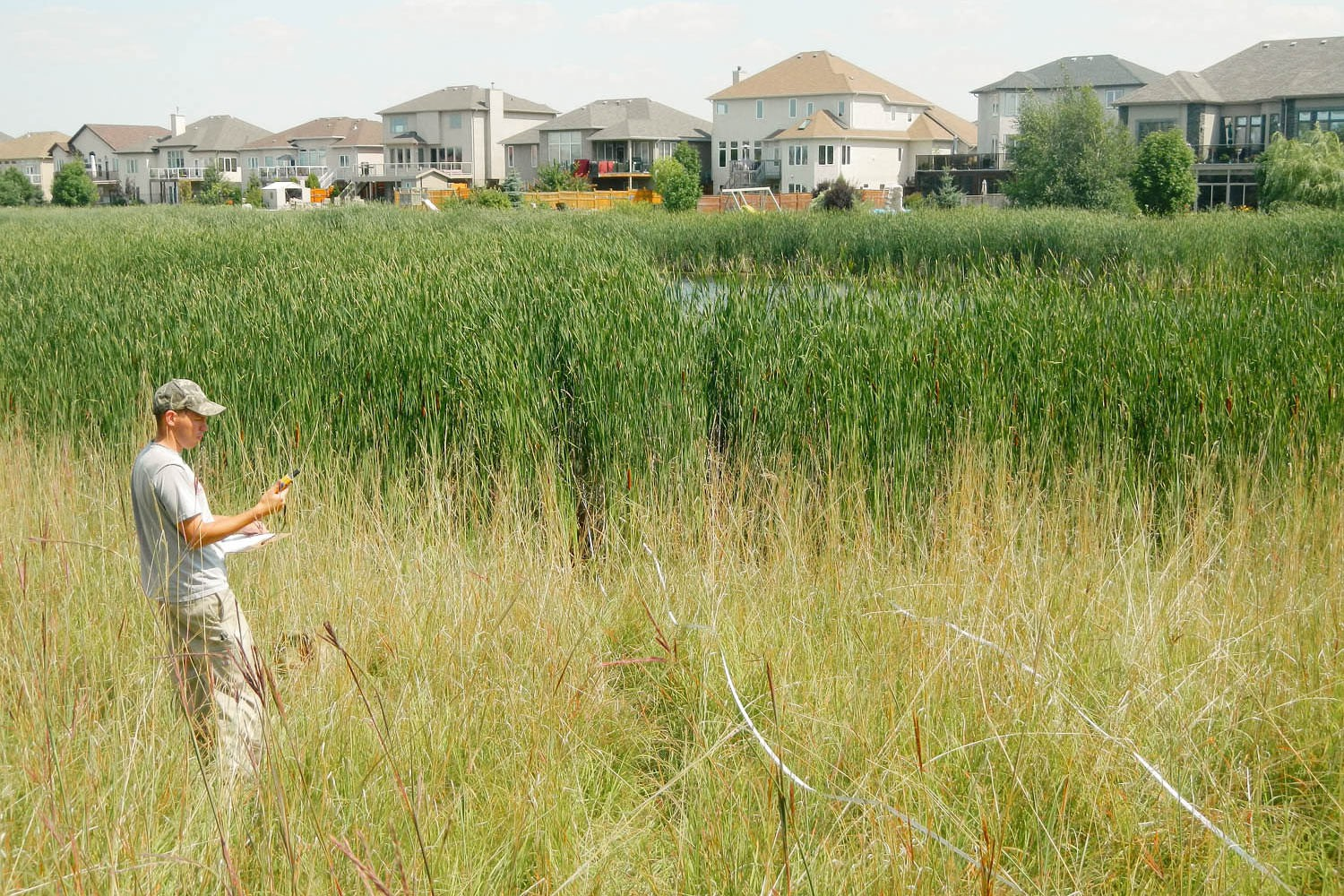 Royalwood native plant solutions for Design of stormwater ponds