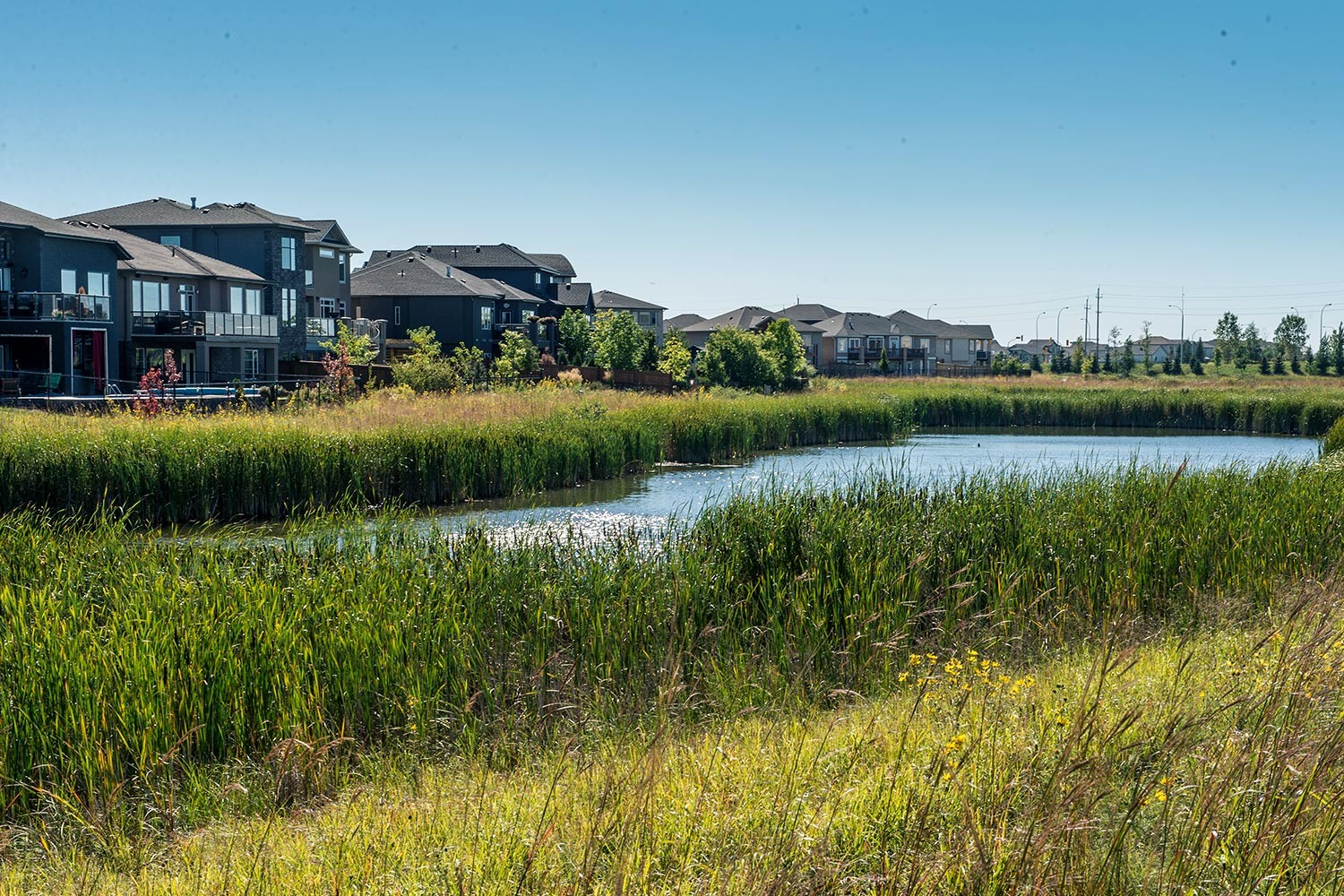 Sage creek native plant solutions for Stormwater pond design